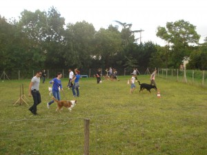 EDUCATION_CANINE_COLLECTIF_ACTC_31