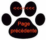 EDUCATION_CANINE_STAGE_RECHERCHE_MORDANT_PASSION_GARDE_DOMICILE